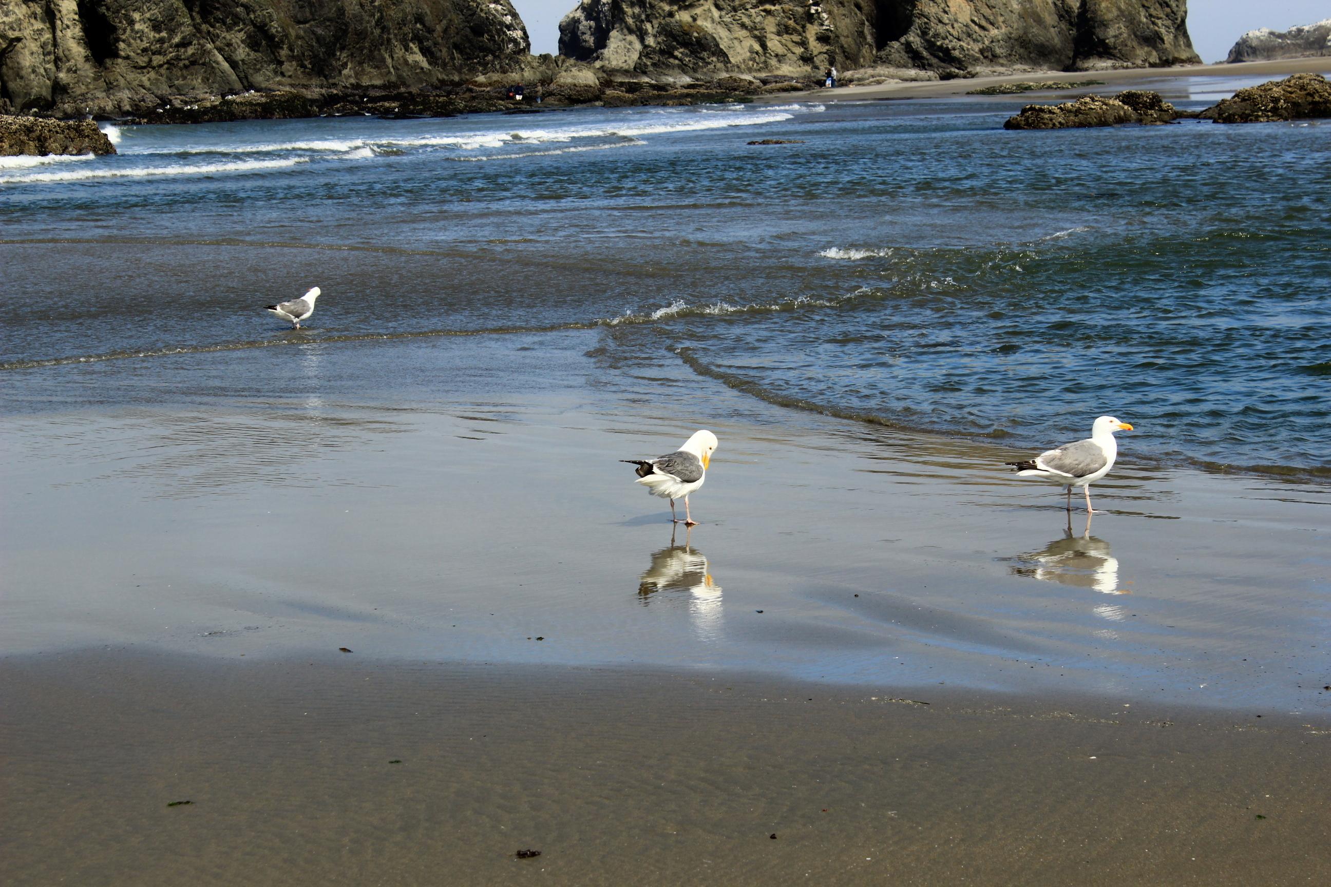 Bandon Beach - 2