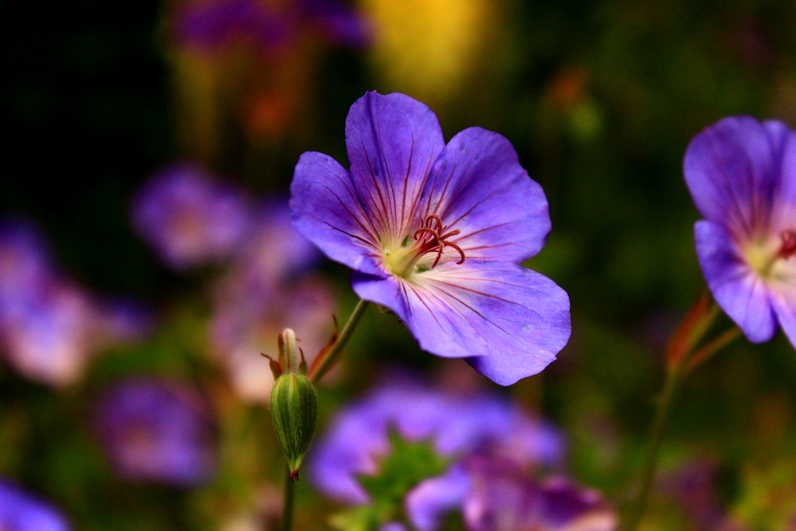 Rose Garden - 1