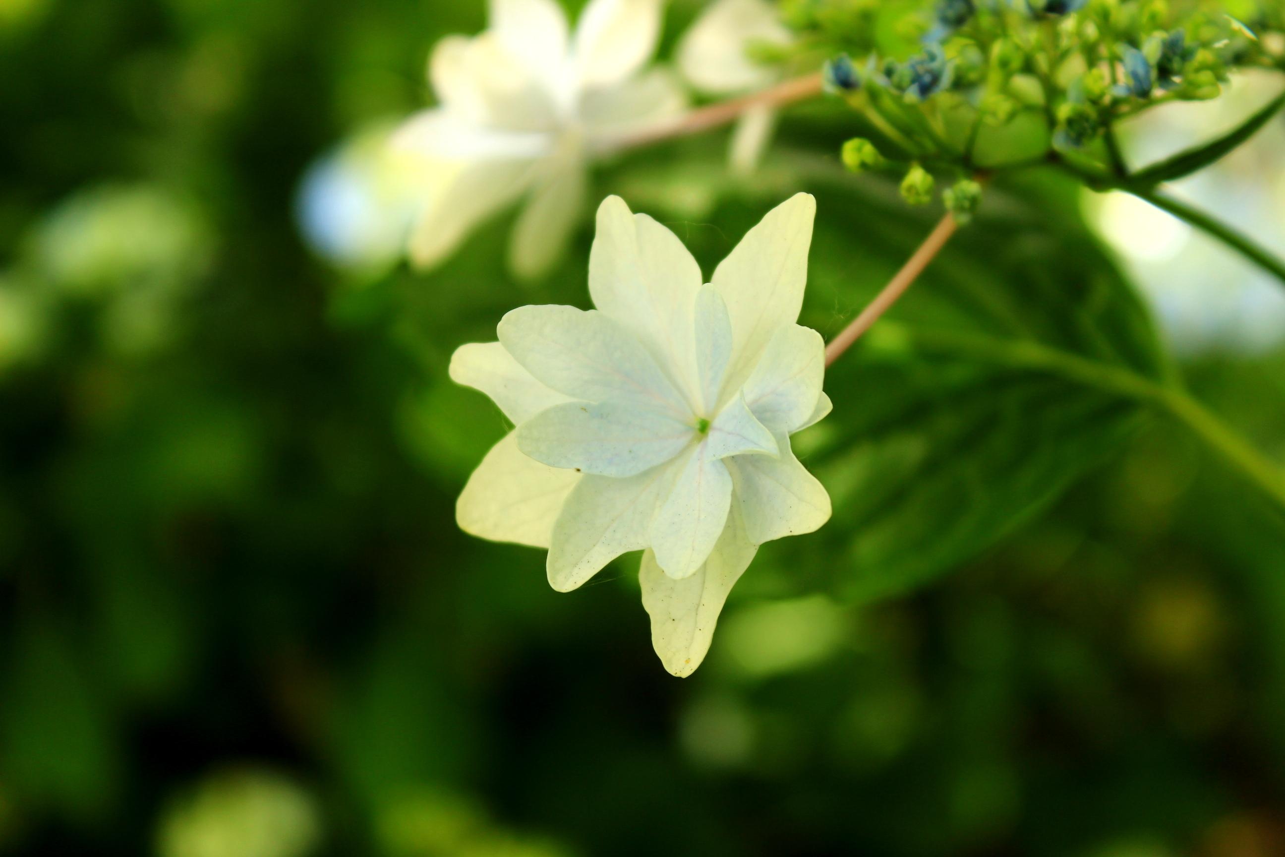 Rose Garden - 3